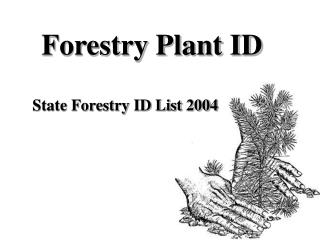 Forestry Plant ID