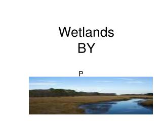 Wetlands BY