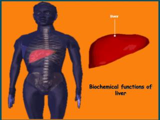 Biochemical functions of liver