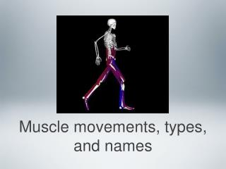 Muscle movements, types, and names