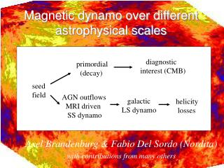 Magnetic dynamo over different astrophysical scales