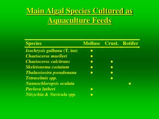 Main Algal Species Cultured as Aquaculture Feeds