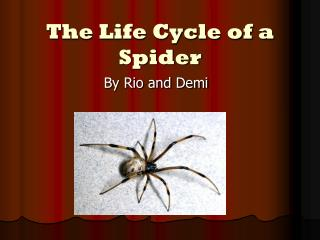 The Life Cycle of a Spider