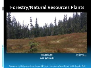 Forestry/Natural  Resources Plants