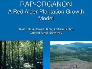RAP-ORGANON A Red Alder Plantation Growth Model