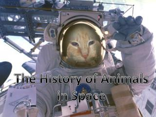A Brief History of Animals in Space