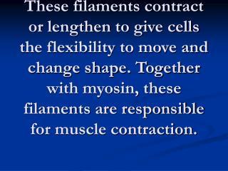 actin filaments