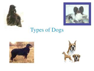 types of dogs