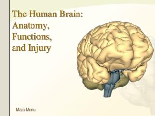 The Human Brain: Anatomy, Functions, and Injury