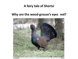 A fairy tale of  Shortsi Why are the wood-grouse's eyes  red?