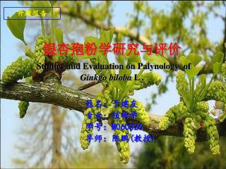 银杏孢粉学研究与评价 Studies and Evaluation on Palynology  of  Ginkgo biloba  L .