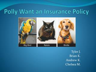 Polly Want an Insurance Policy