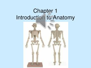 Chapter 1 Introduction to Anatomy