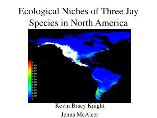 Ecological Niches of Three Jay Species in North America