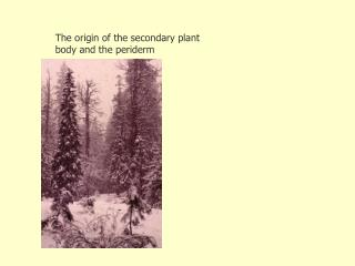 The origin of the secondary plant body and the periderm