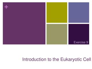 Introduction to the Eukaryotic Cell