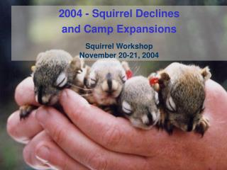 2004 - Squirrel Declines  and Camp Expansions Squirrel Workshop November 20-21, 2004