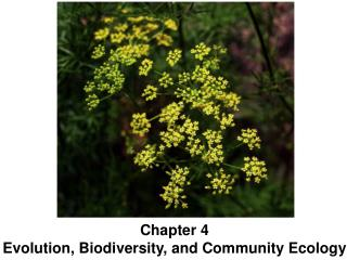 Chapter  4 Evolution, Biodiversity, and  Community Ecology