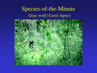 Species-of-the-Minute