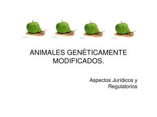 ANIMALES GENÉTICAMENTE MODIFICADOS.