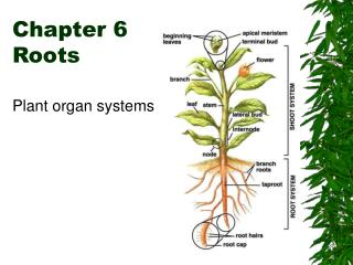 Chapter 6  Roots