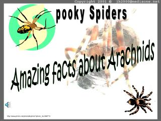 pooky Spiders