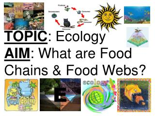 TOPIC : Ecology AIM : What are Food Chains & Food Webs?