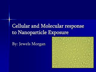 Cellular and Molecular response to Nanoparticle Exposure
