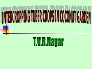 INTERCROPPING TUBER CROPS IN COCONUT GARDEN