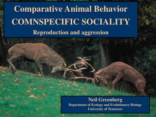 Comparative Animal Behavior COMNSPECIFIC SOCIALITY Reproduction and aggression