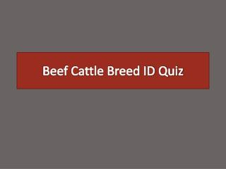 Beef Cattle Breed ID Quiz