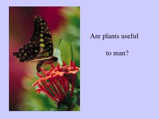 Are plants useful 	to man?
