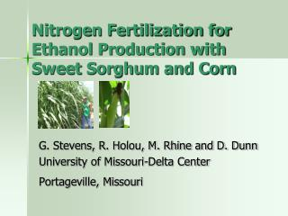 Nitrogen Fertilization for Ethanol Production with Sweet Sorghum and Corn