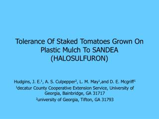 Tolerance Of Staked Tomatoes Grown On Plastic Mulch To SANDEA (HALOSULFURON)