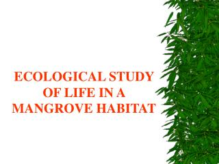 ECOLOGICAL STUDY OF LIFE IN A MANGROVE HABITAT