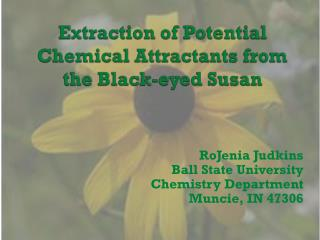 Extraction of Potential Chemical Attractants from the Black-eyed Susan