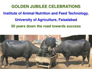 GOLDEN JUBILEE CELEBRATIONS Institute of Animal Nutrition and Feed Technology, University of Agriculture, Faisalabad 50