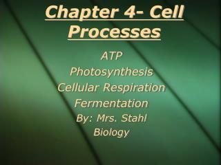 Chapter 4- Cell Processes