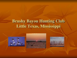 Brushy Bayou Hunting Club Little Texas, Mississippi