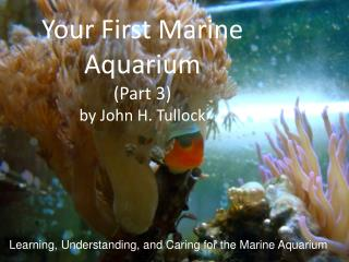 Your First Marine Aquarium  ( Part 3) by John H.  Tullock