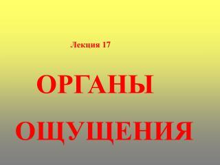 Лекция 1 7 ОРГАНЫ     ОЩУЩЕНИЯ