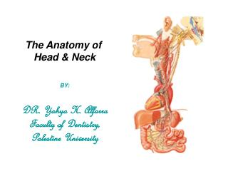 The Anatomy of  Head & Neck   BY: DR. Yahya H. Alfarra Faculty of Dentistry, Palestine University