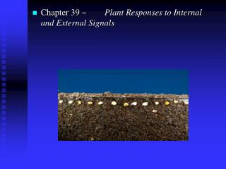 Chapter 39 ~	   Plant Responses to Internal and External Signals