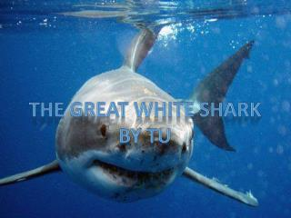 The Great White Shark By  tu