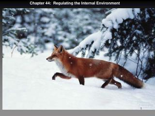Chapter 44:  Regulating the Internal Environment