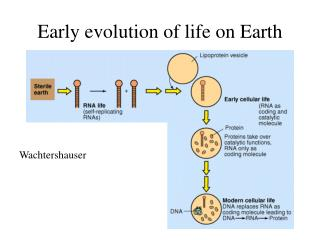 Early evolution of life on Earth