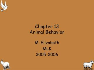 Chapter 13 Animal Behavior