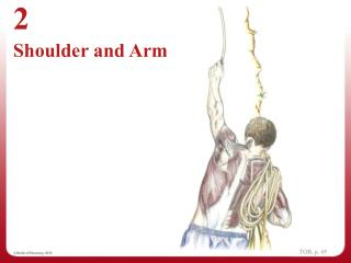 Chapter 2 - Shoulder and Arm