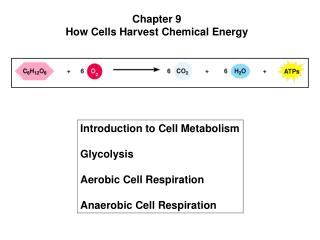 Chapter 9 How Cells Harvest Chemical Energy