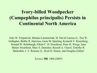 Ivory-billed Woodpecker ( Campephilus principalis ) Persists in Continental North America